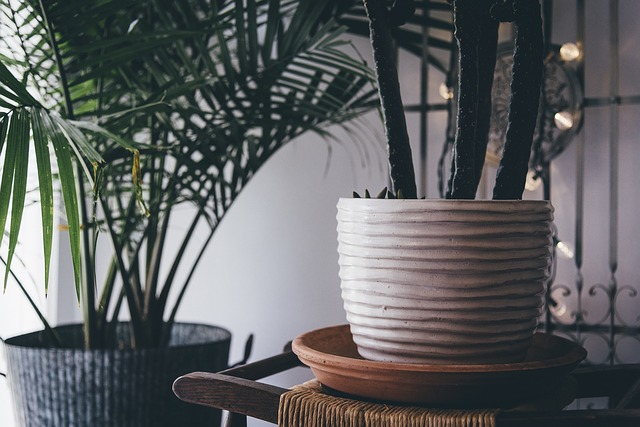 Best Indoor Plants for your Home